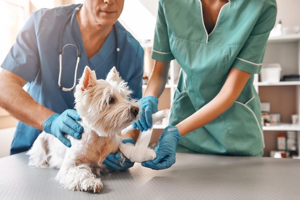 ¿Qué es lo imprescindible en una clínica veterinaria?