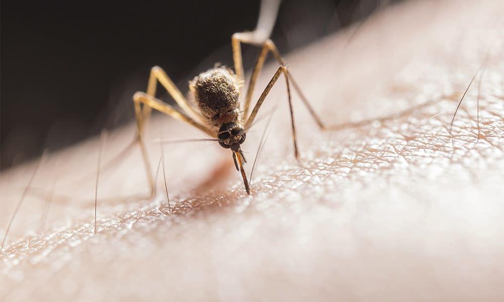 Las enfermedades tropicales infecciosas más comunes