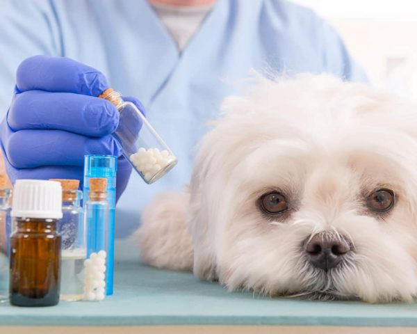 Estudiar máster farmacia veterinaria