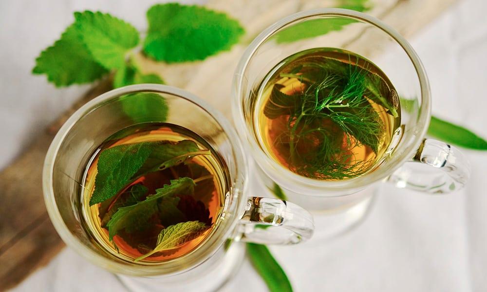 Plantas medicinales como remedio curativo